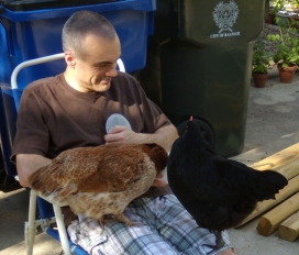 play_with_chickens